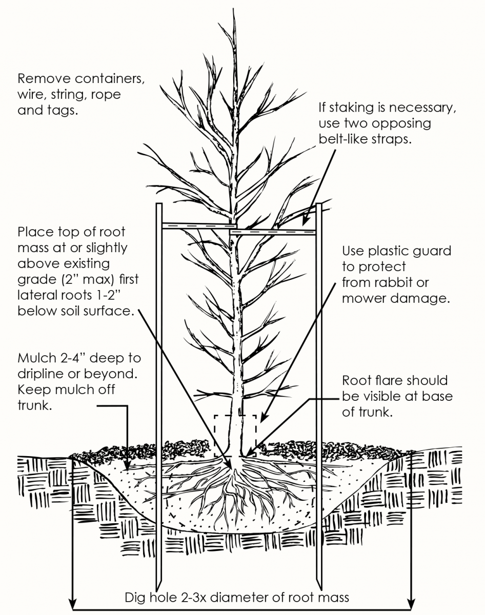 How plant a tree infographic