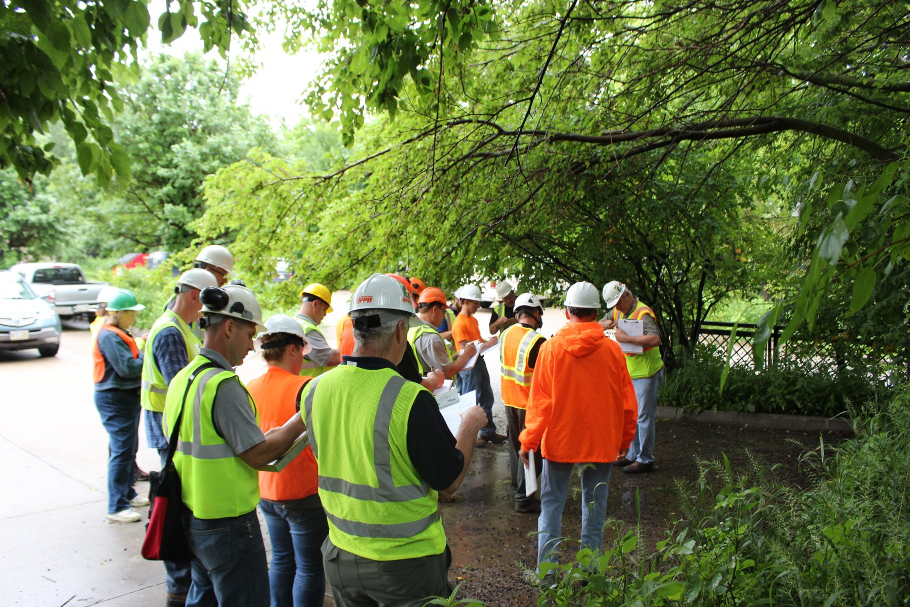 surveyors look at trees at another workshop