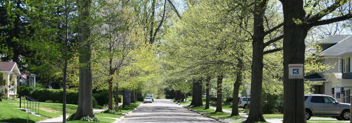 The urban canopy; trees pleasantly overhang a neighborhood street in Lincoln.