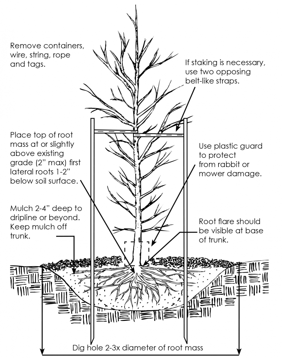Diagram on tree planting