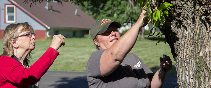 NFS staff member examines homeowner's ash tree.