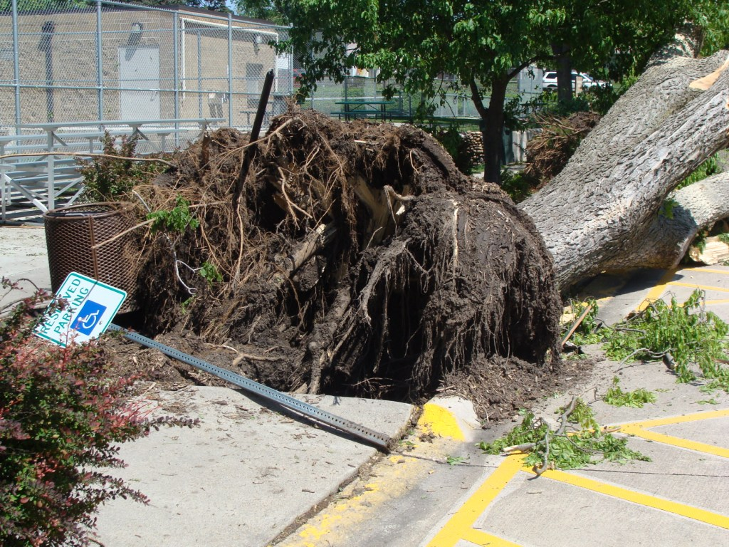 A tree is tipped over in a parking lot
