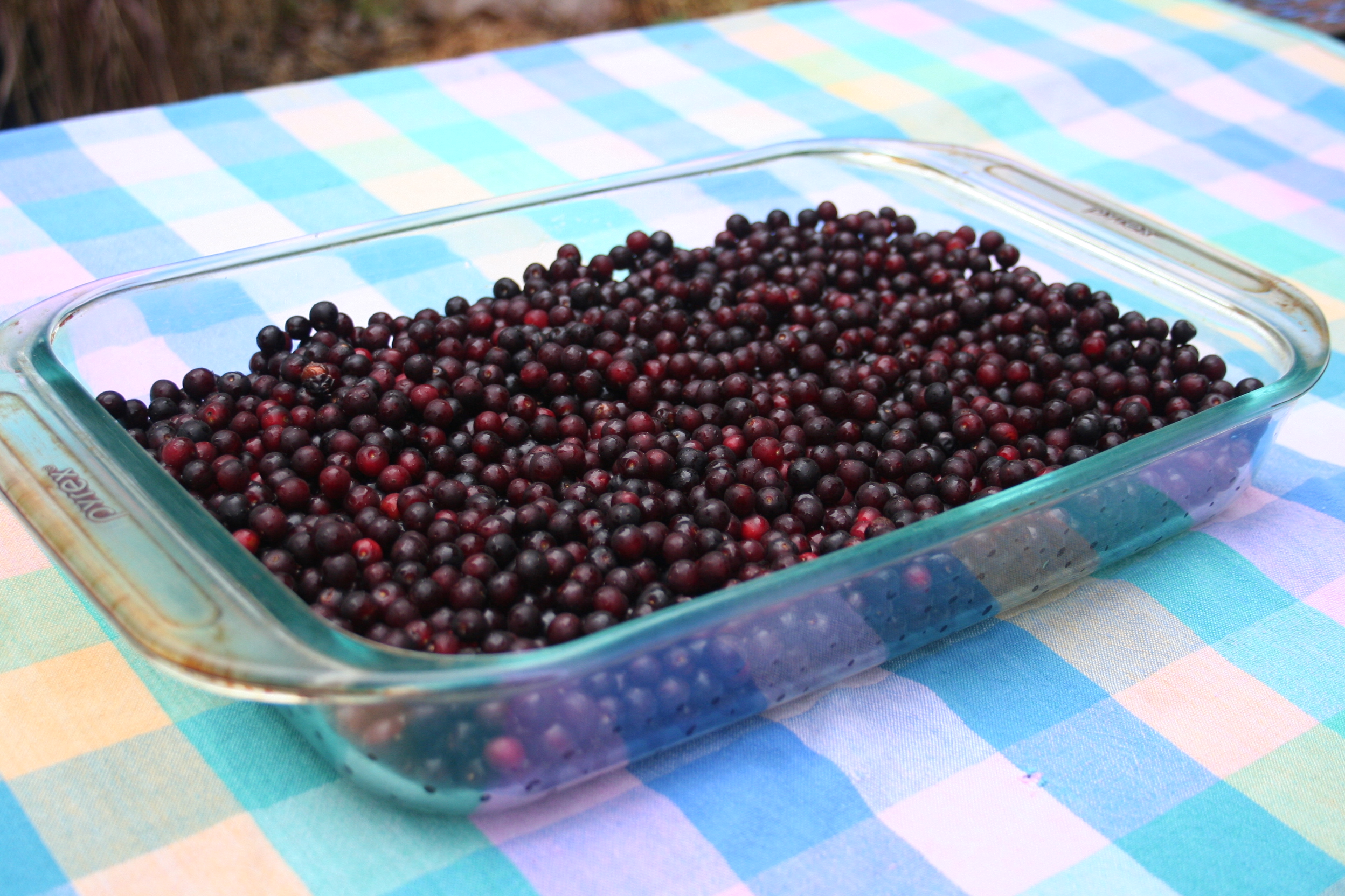 chokecherry's fruit in a casserole bowl
