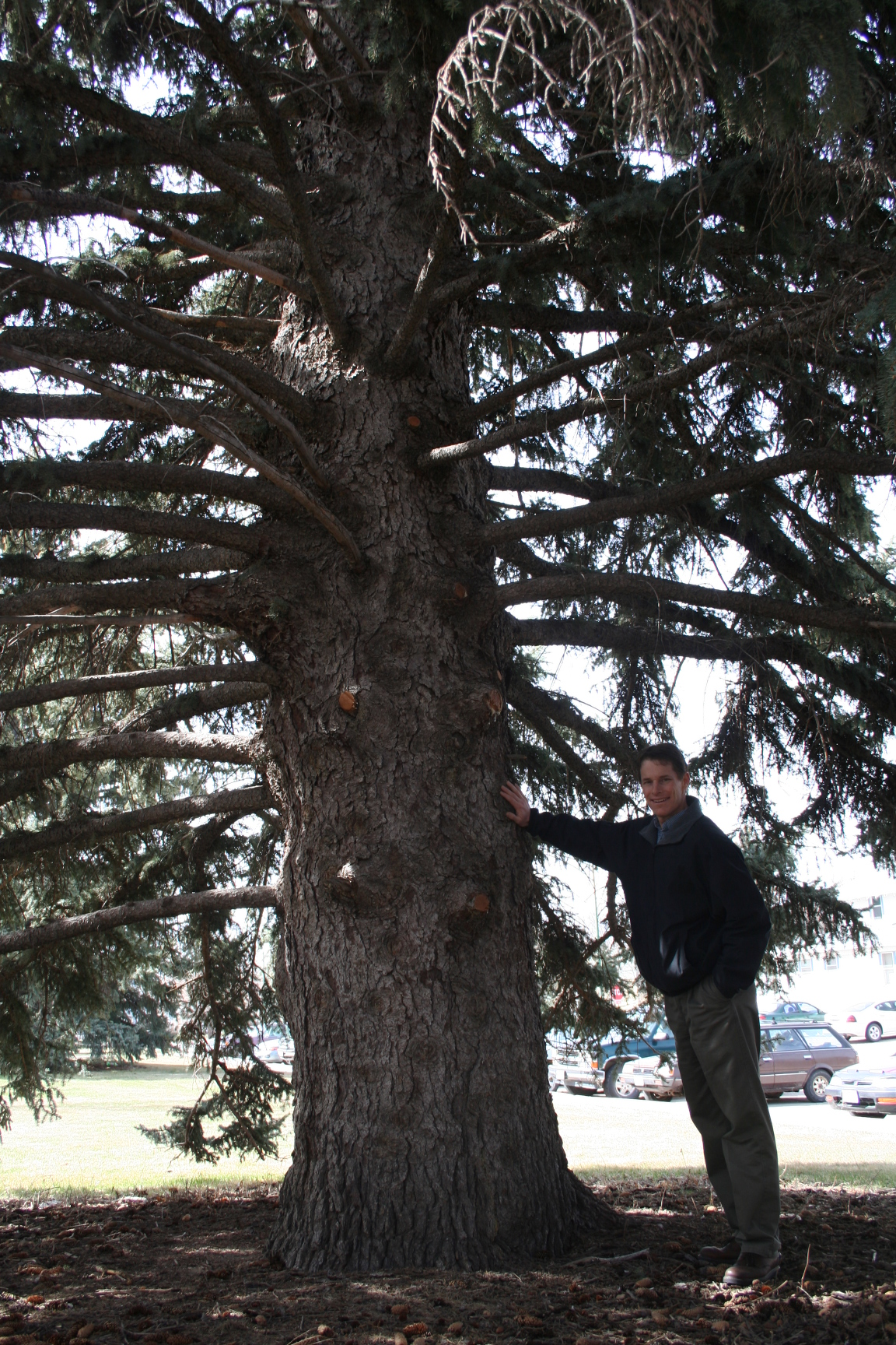 "Justin Evertson, Green Infrastructure Coordinator, poses with a ""blue"" spruce."