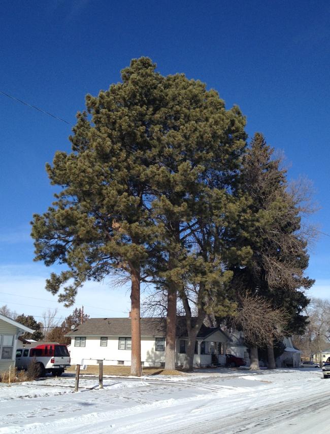 Tree near house