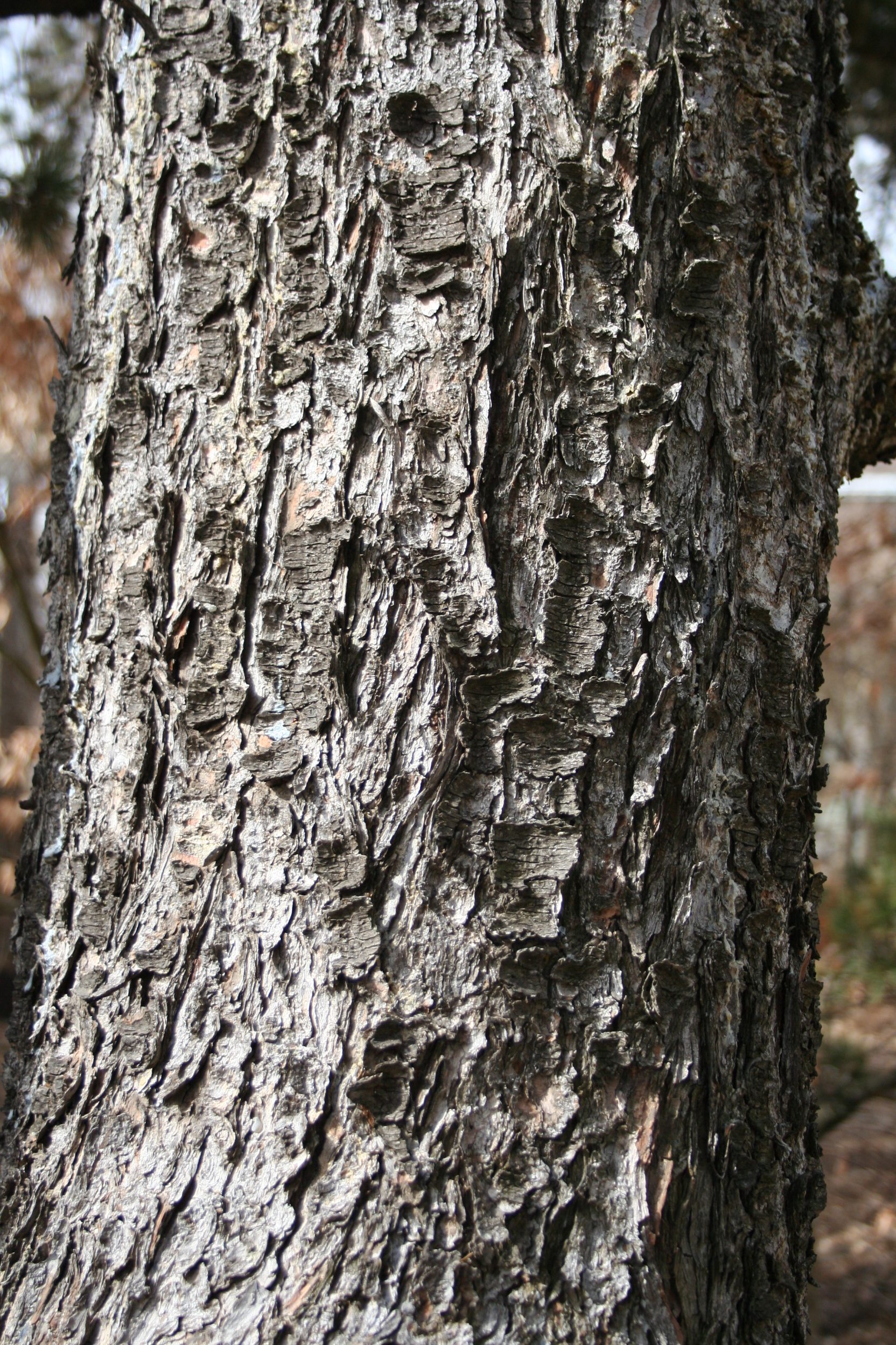 bark closeup