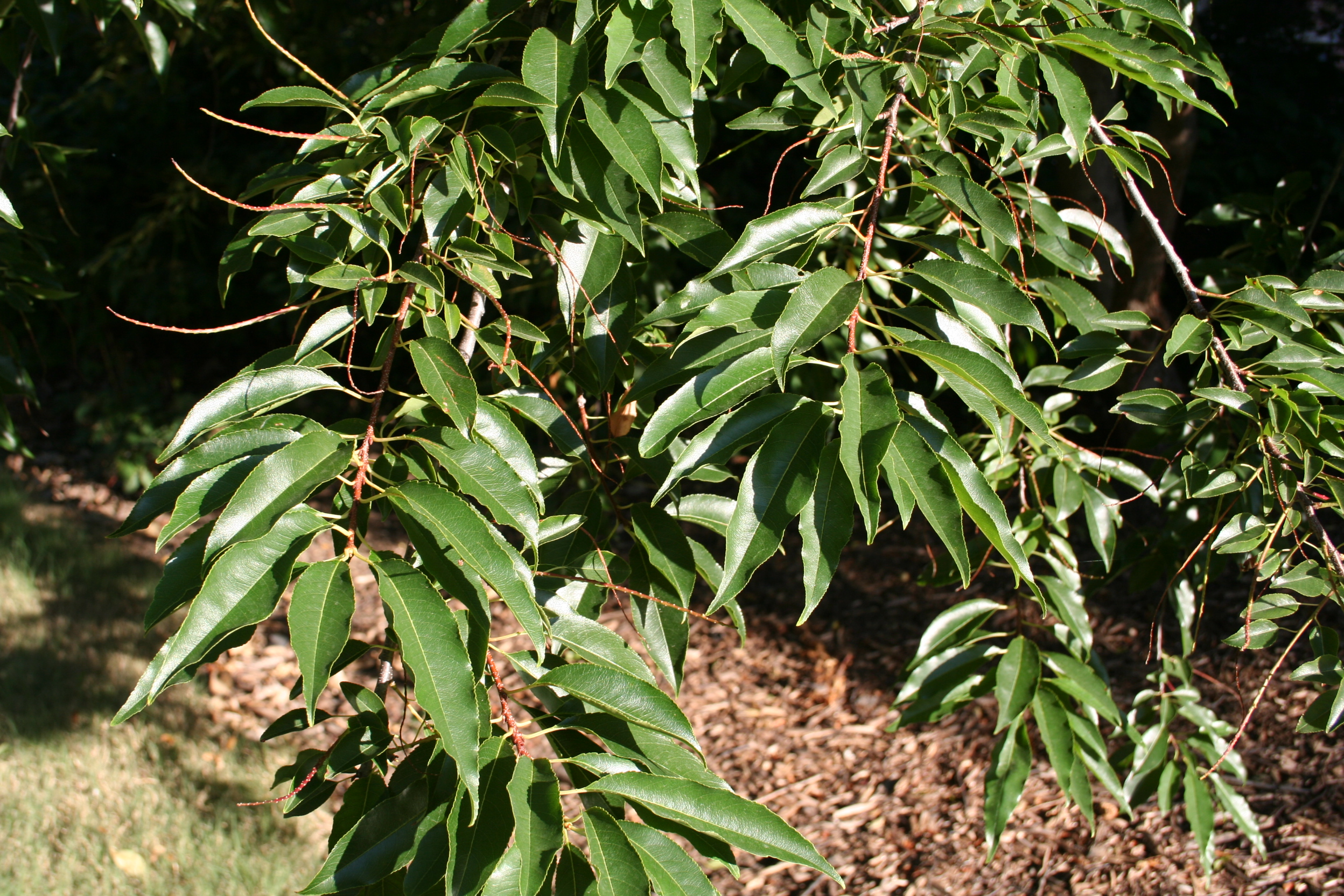 Closeup of leaves