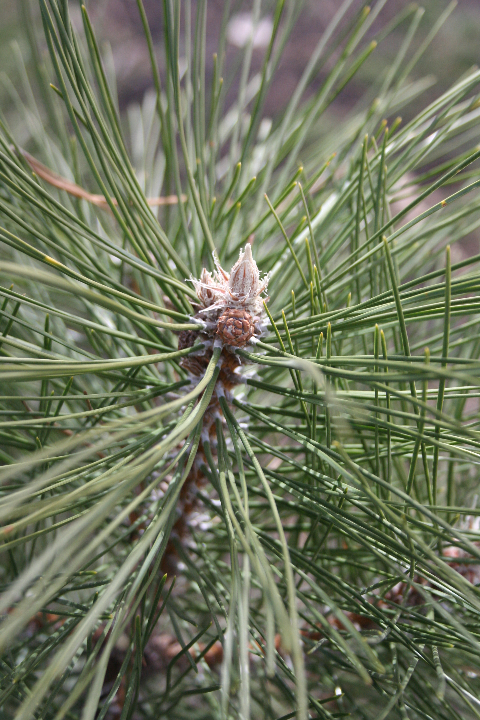 Close-up of needles