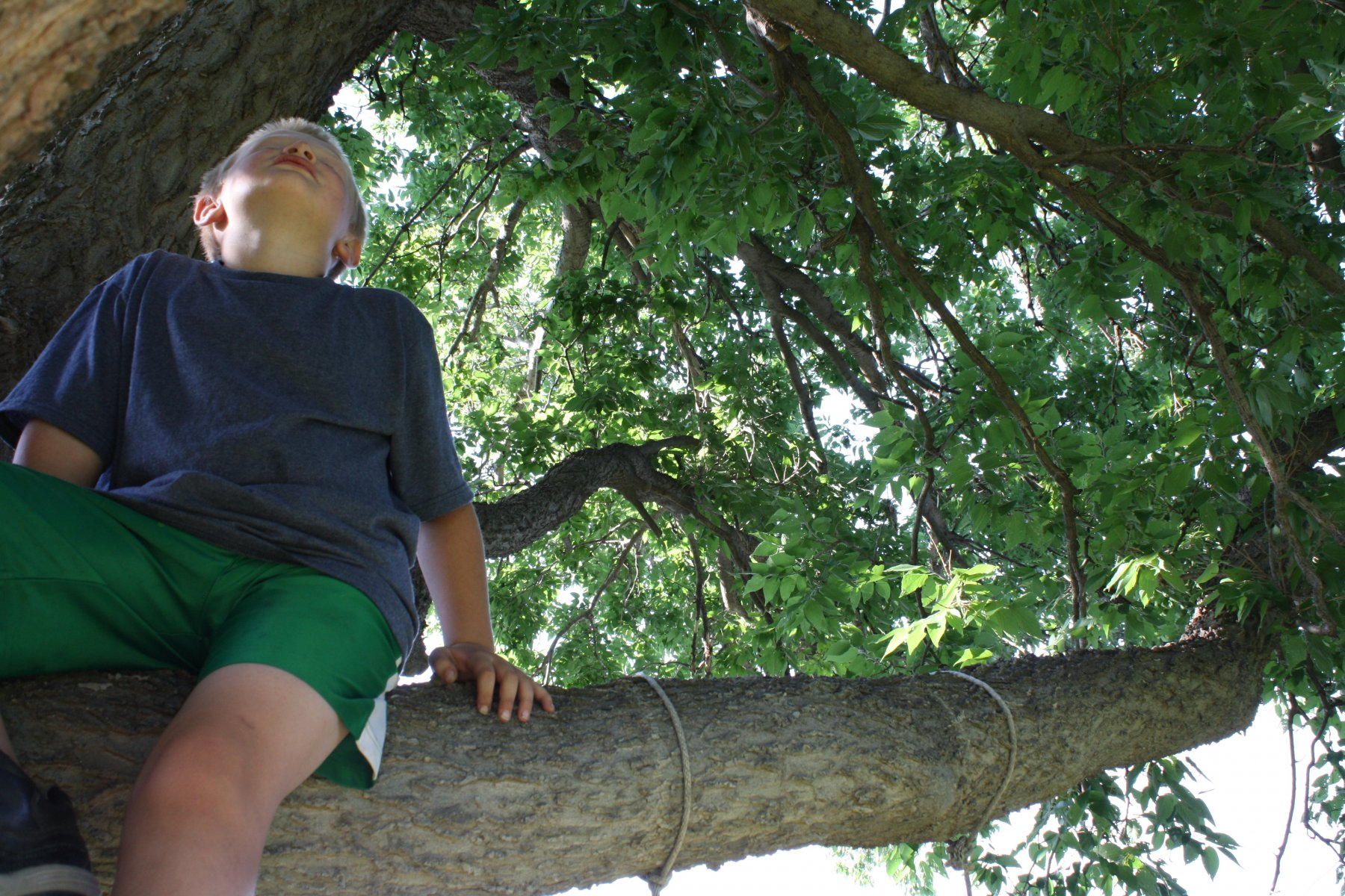 A child gazes into tree canopy above.