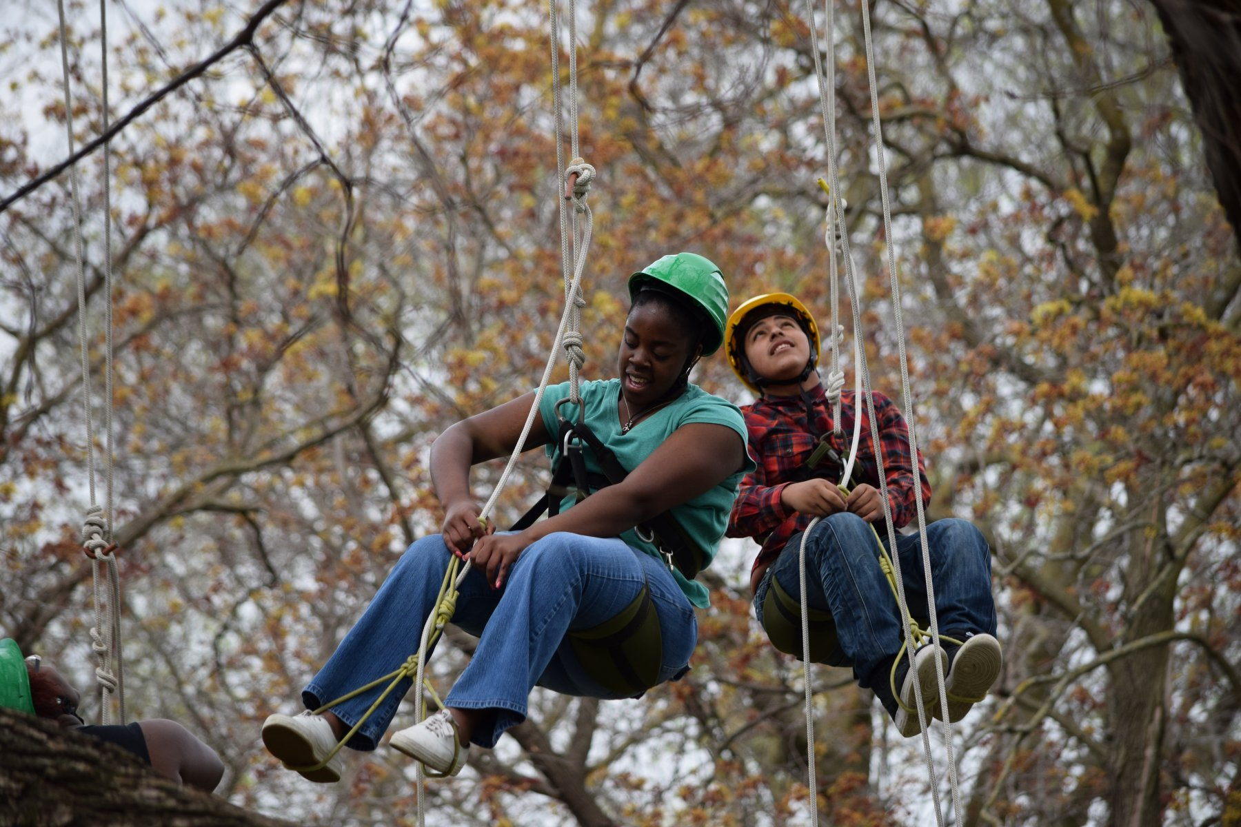 Kids climbing a tree with rope harnesses.