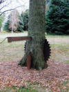 Saw Blade Pin Oak