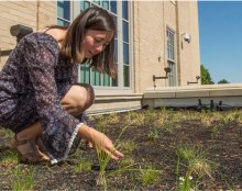 "A University of Nebraska-Lincoln student looks over the grasses in a ""green roof"" at the University's East Campus."