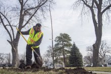 A volunteer plants a tree at an Omaha park.