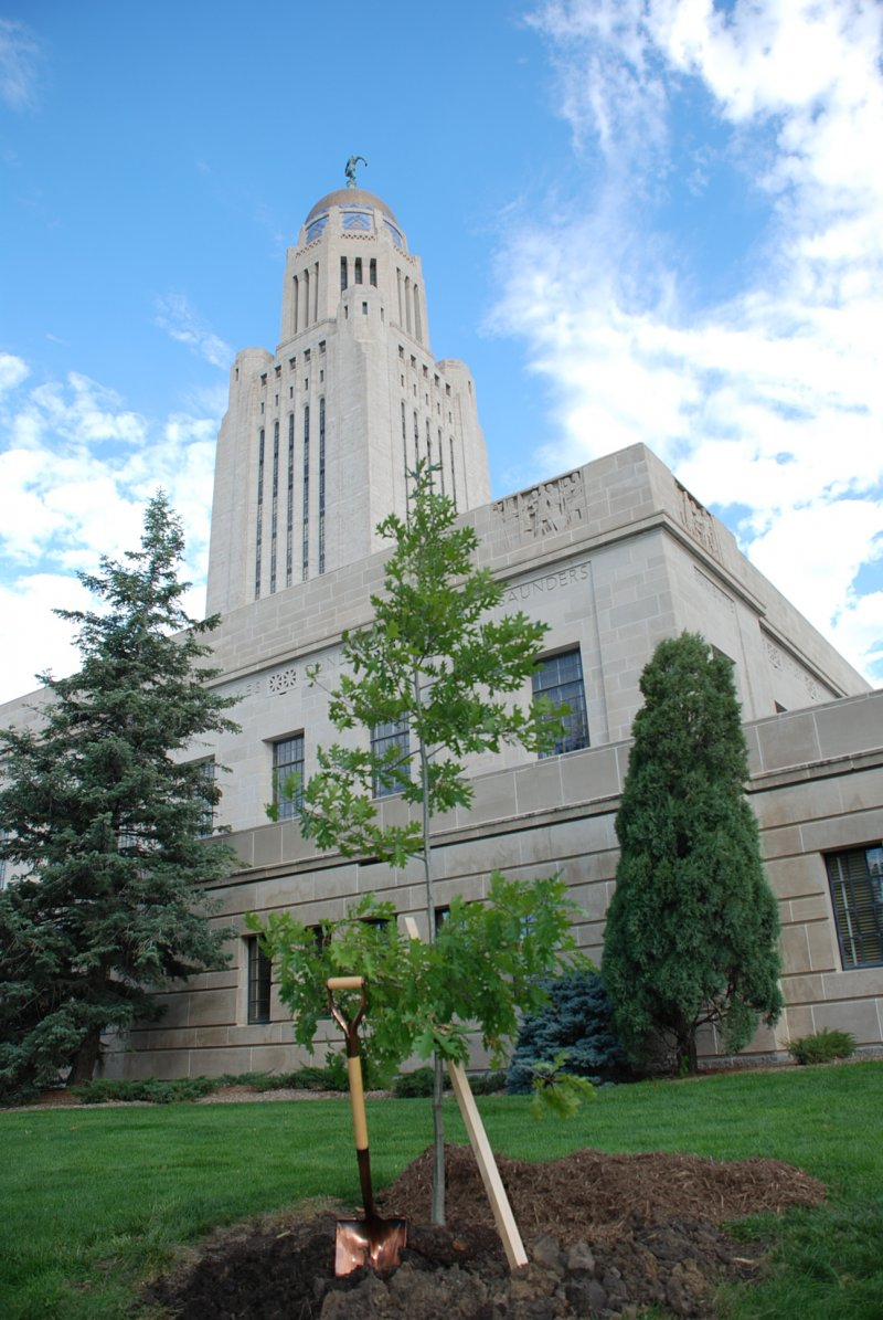 Picture of a tree planted at the Nebraska capitol building.