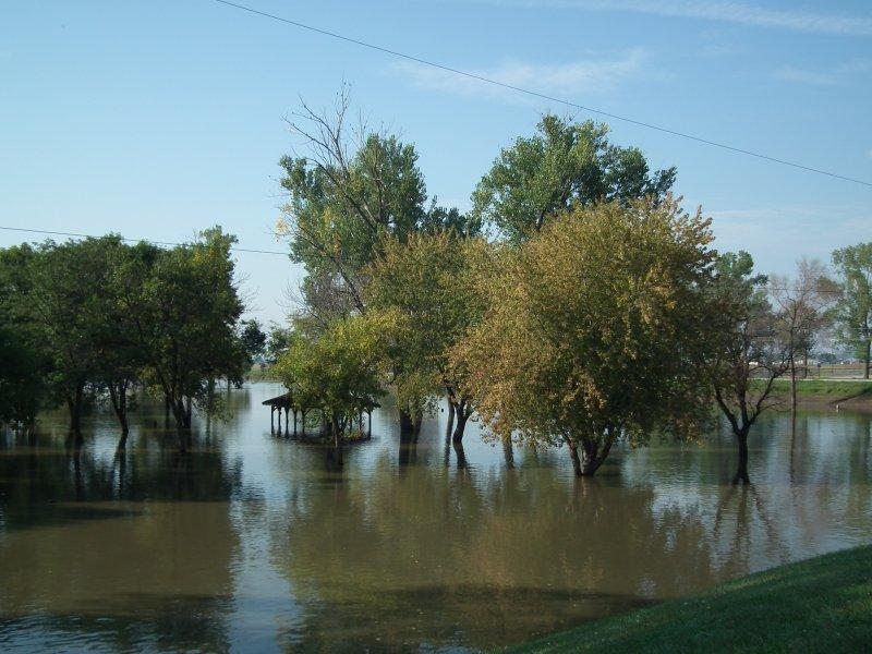 Flooded trees at Hayworth Park