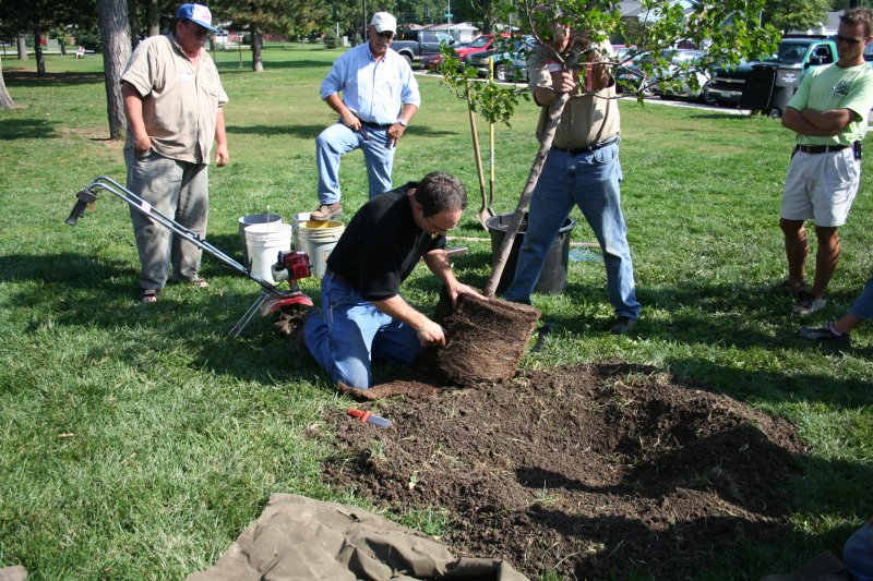 Man placing root ball into hole dug in soil.
