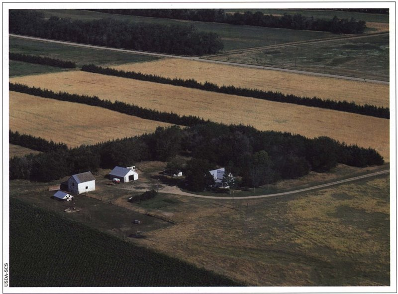 Photo of a well-designed farmstead windbreak.