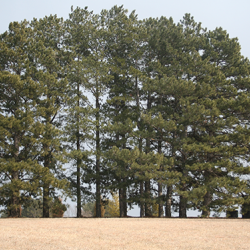 Trees To Plant In Nebraska Nebraska Forest Service