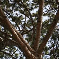 Looking up into tree's canopy.